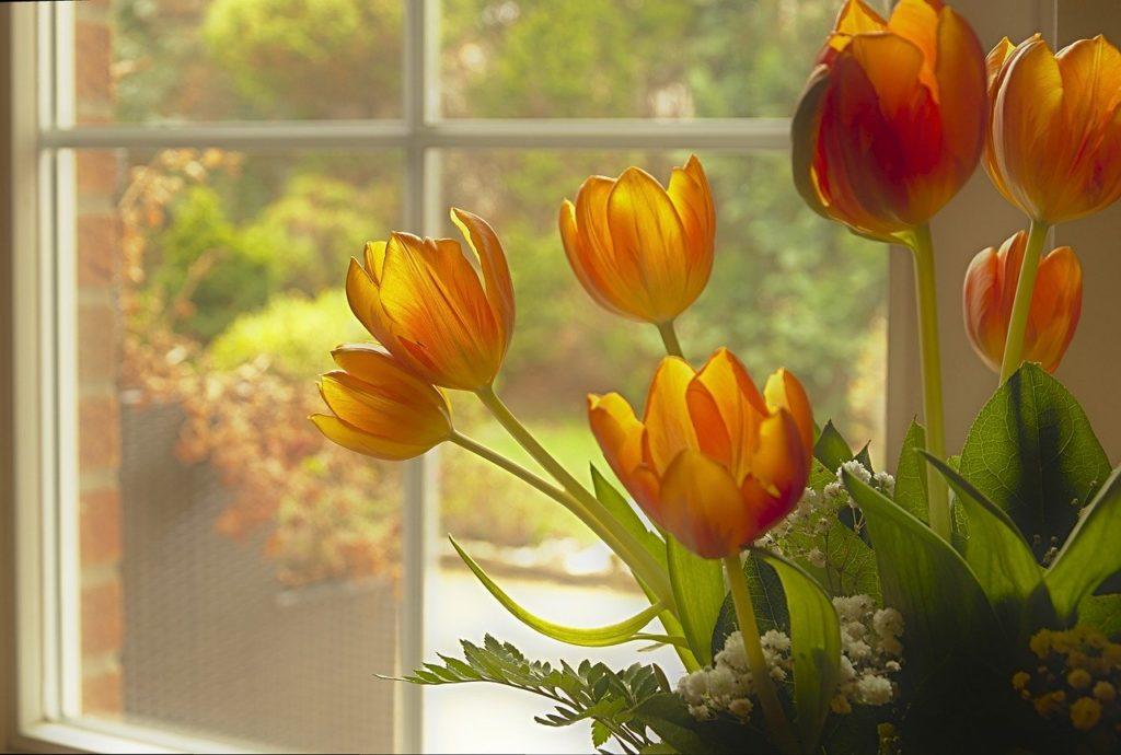 tulips, tulip bouquet, bouquet